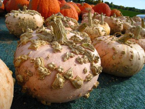 FrenchPumpkin