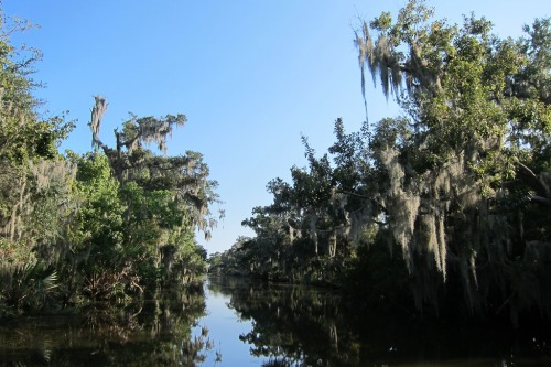 The area around Lafitte, LA (seen by airboat