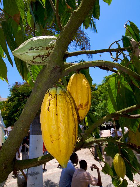CacaoHaiti